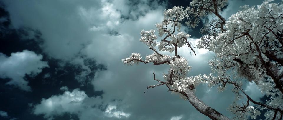 tree branch ir