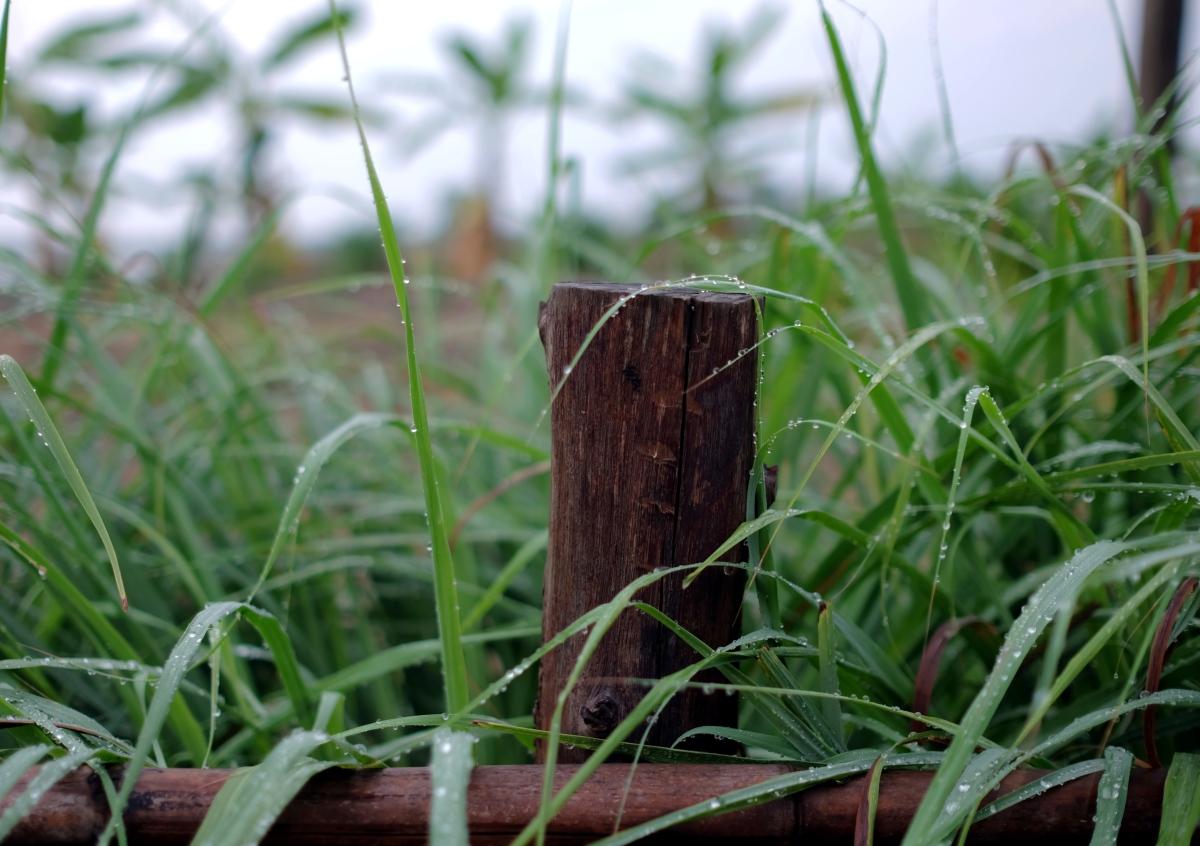 grass f 14