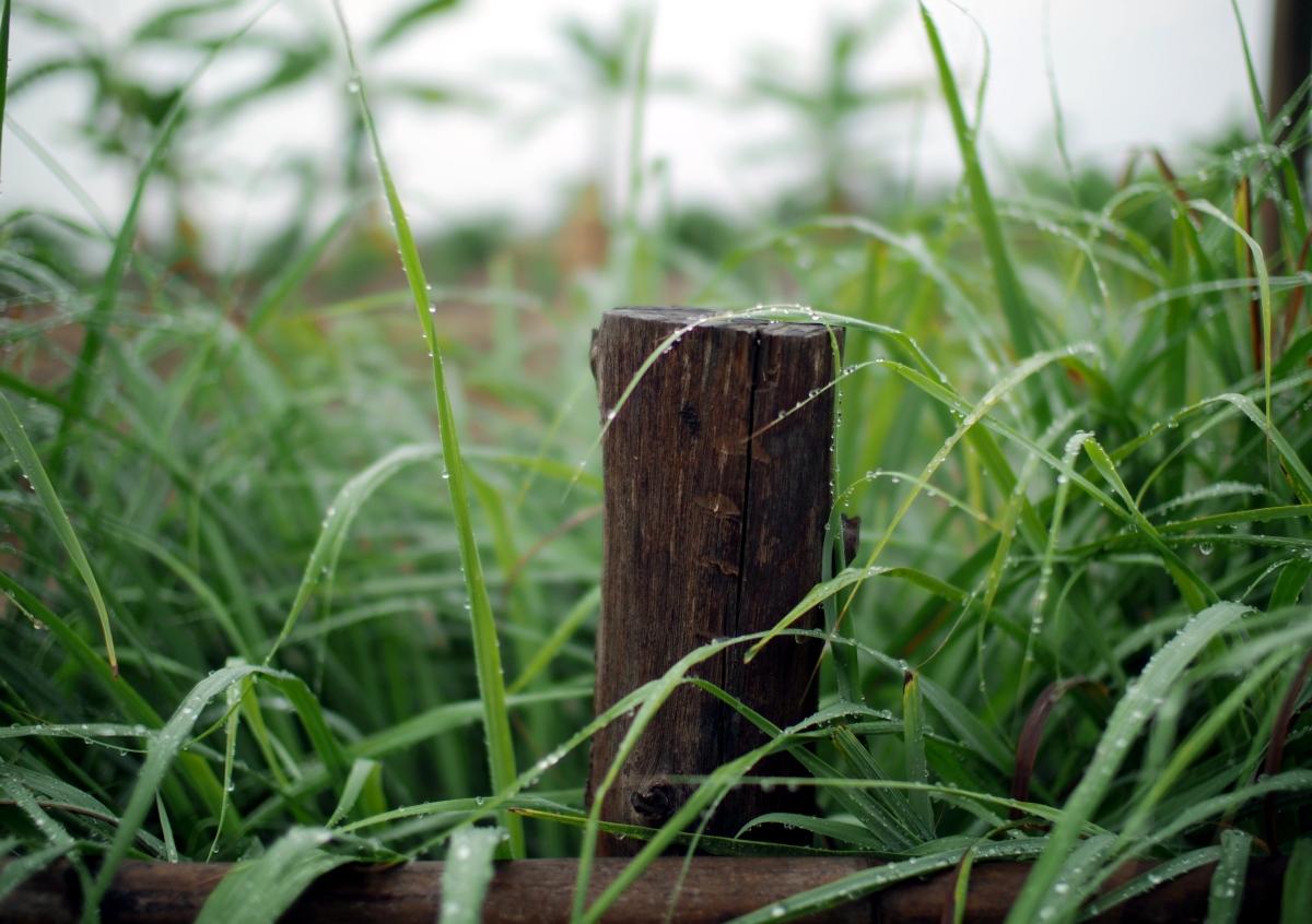 grass v 09